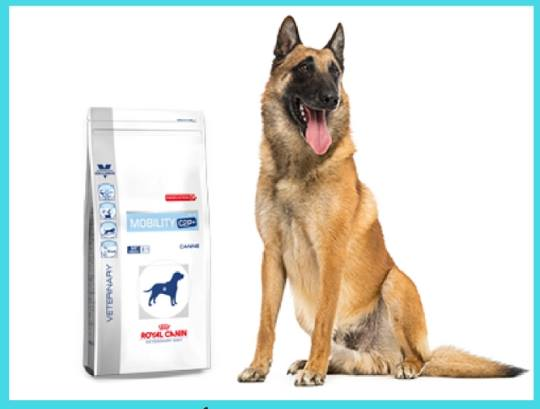 prueba-gratis-pienso-royal-canin