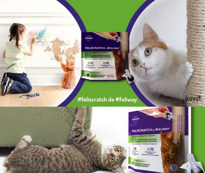 Reembolso del 50% en FeliScratch de Feliway para enseñar a tu gato donde rascar
