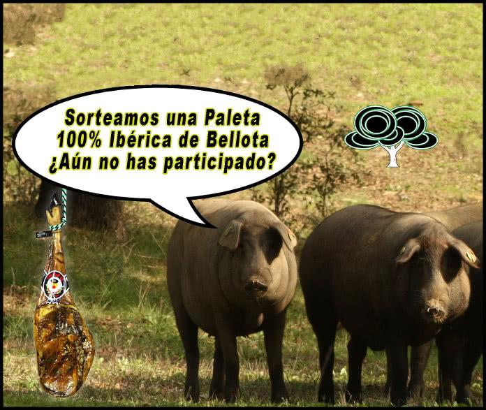 Sabor de Extremadura sortea una paletilla 100% Ibérica de Bellota