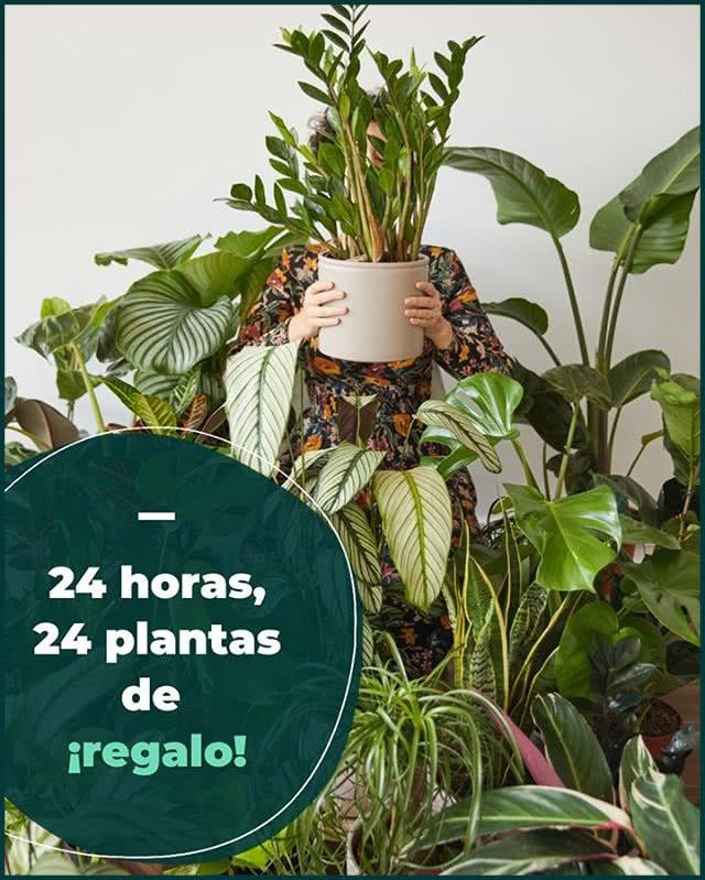 Sorteo Colvin Jungle 24 Horas 24 Plantas